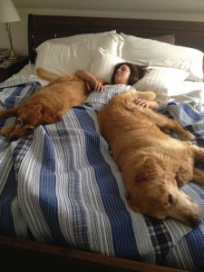 A few years ago nobody, not even me, would believe I'd be sharing a bed with two big dogs! I miss those days when their legs were strong enough to come up to our room. They got me through a lot of nights when Mo was traveling for work.
